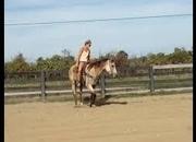 Quarter Horse, Arabian - 15.2 Hands hh - Ohio