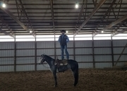 Once in a lifetime gelding!!