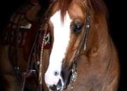 Place your bids at www.PlatinumEquineAuction.com experienced ranch horse, big stout and gentle for anyone on trails or around the ranch! NRHA money earner!!!