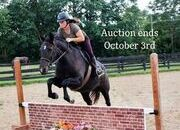 Place your bids at www.PlatinumEquineAuction.com beginner safe Ranch/Trail horse, Dressage prospect, proven Jumper!