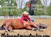 Place your bids at www.PlatinumEquineAuction.com big stout and gentle for anyone to ride on trails or around the ranch! Trick Horse!!!