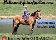 Place your bids at www.PlatinumEquineAuction.com Family/Kid safe trail horse, gentle for any rider on trails or around the ranch! Confidence builder!!!