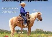 Place your bids at www.PlatinumEquineAuction.com Kid safe ranch/trail horse, Rides like dads big horse! TRAINED TRICK HORSE!!!
