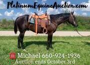 Place your bids at www.PlatinumEquineAuction.com ranch/trail horse, family safe!