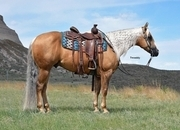 Money Earner-Reining/Ranch/Trail.  Own some of Wimpys Little Step!