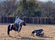Cool All Around Pony