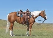 AQHA Points in Open/Amt Ranch Riding!  Own daughter of Smoking Whiz!  Broke Broke!