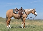 Own Daughter of Gunners Special Nite!  Beautiful Palomino Mare with 2 Blue Eyes!