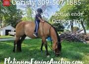 Place your bids at www.PlatinumEquineAuction.com Family safe ranch horse, gentle for any rider on trails or around the ranch! Ridden all across the USA! Draftcross!!!