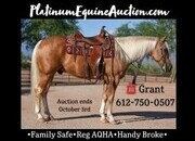 Place your bids at www.PlatinumEquineAuction.com Shining Spark and Peppy San Badger Bred!!! Family safe ranch horse, gentle for any rider on trails or around the ranch! Penning, Sorting, Roping, Drives under Harness!