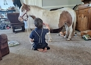 Mini Mare Pony 33