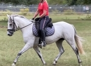 Pretty and athletic eventing, jumping or dressage prospect!