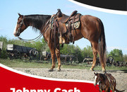 Johnny cash has lots of world champions on his pedigree papers. He would be a great horses for rodeo Queen contest or any 4H reining, trail, western riding, or any other event you would like to use him in.