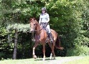 *SOLD* Hunter Paces, Jumping, Endurance,Fox Hunts-Forward Ride without the stupid