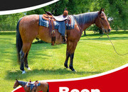 AQHA Registered Bay Roan Gelding -If you been looking for that once and a lifetime horse then look no further