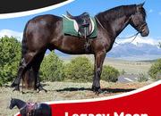 Legacy Moon is a 3yr Friesian Sport Horse gelding, SAFE!.SAFE.!SAFE!