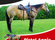 Pistole Annie -Registered AQHA, a great trail horse and arena horse.