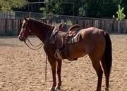 Chestnut Family/Ranch Horse