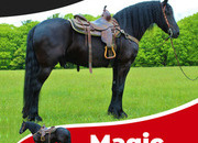 Magic, 100% Purebred Friesian Gelding!! Wow !! He is FPZV Registered and has his passport out of Germany. This is a Rare Opportunity to own a horse like this!