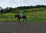 Soft-gaited mare blk. ❤