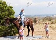 Gaited Tennessee Walking Trail Horse Mare