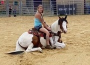 Jayde - beautiful Gypsy cross mare, 14.3 hands, 3 years old, trails, safe, gentle