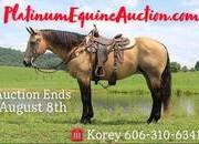 Place your bids at www.PlatinumEquineAuction.com well broke ranch horse, big stout and gentle on trails or around the ranch!