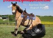 CROSSBRED TRICK HORSE!!! Place your bids at www.PlatinumEquineAuction.com Crossbred, Jumping, Dressage, Harness, Ranch, Roping, Trails... Beginner Safe!!!