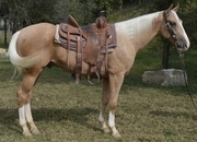 Freckles Playboy, Sugar Rocket - Loud colored Palomino gelding
