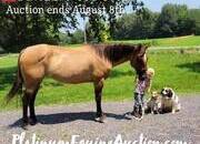 Place your bids at www.PlatinumEquineAuction.com beginner safe ranch horse, gentle for any rider on trails or around the ranch!