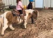 Gentle Paint Mini Pony