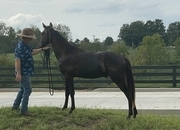 Ed's Rainy Day ! Yearling Colt