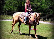 Babysitter Registered AQHA Palomino Nice Set Of Papers