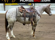 Place your bids at www.horsebid.com, ATTENTION!! Anybody can Ride, 13.2 Hands tall, Safe!! Beginner & family safe, Gentle, One of a Kind!