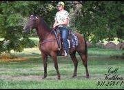 Gorgeous, Stout Built, Timid Rider Safe, Buckskin Tennessee Walker Trail Gelding