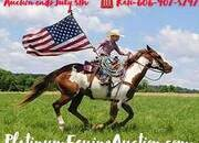 Place your bids at www.PlatinumEquineAuction.com beginner/family safe trail/ranch horse, stout built and gentle for any rider on trails or around the ranch!
