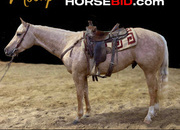 Place your bids at www.horsebid.com, ATTENTION: Triple registered 3 year old AQHA, APHA, and Palomino association!, Gentle, Show, English, Western, trails, One of a Kind!