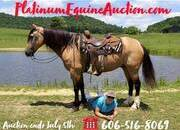 Place your bids at www.PlatinumEquineAuction.com excellent ranch/trail horse, big stout nice mover, driving, dressage, jumping prospect!!!