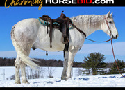 Place your bids at www.horsebid.com - HIGHLIGHT!!! Draft Cross, Beginner & family safe, Gentle, One of a Kind!