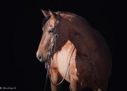 Ranchita PlayGun - 7 year old registered AQHA bay mare