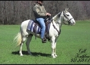 ***SOLD*** --- Gorgeous, Beginner/Timid Rider Blue Roan/ White Spotted Saddle Trail Gelding