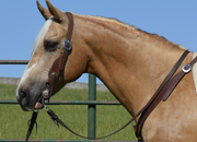 Junior - The PERFECT Trail horse