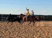 Ranch Horse Deluxe
