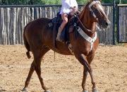 Saint Nichola - 14.1H, 16 year old sorrel quarter horse mare