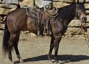 Joe Jack Honey Bar, Two ID Bartender - BROKE gelding
