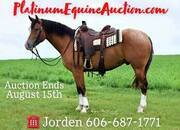 Beginner safe ranch horse, great on trails, gentle for any rider!