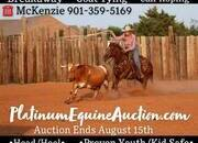 Place your bids at www.PlatinumEquineAuction.com Beginner/Kid/Youth Breakaway/Goat Tying/Calf Roping, Team Roping Horse! Gentle for any rider on trails, around the ranch, in the Box or in the Areana!