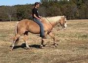 Sweet All Around Pony