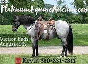 Place your bids at www.PlatinumEquineAuction.com beginner/kid safe trail/ranch horse, gentle for any rider, lots of handle, lots of color and lots of SENSE!