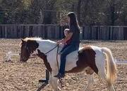 Cool Paint Pony